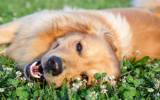 Bach flowers mix 104 Epilepsy in dogs